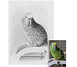 Bird Gallery Portrait