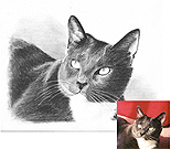 Cat Gallery Portrait