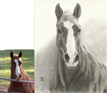 Appaloosa/Quarter horse portrait