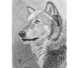 Portrait of Wolf Amadeus