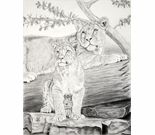 Lioness and Cub charcoal
